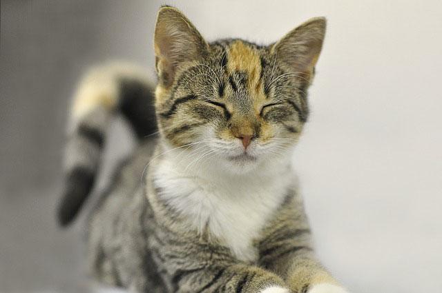 ניתן למנוע מראש את דלקת החניכיים אצל חתולים