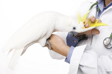 Ветеринар в Ашдоде