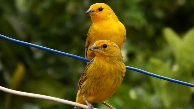 וטרינר ציפורים ועופות