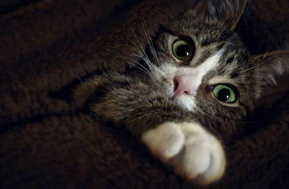 הטיפולים הקבועים שכל בעל חתול צריך להכיר