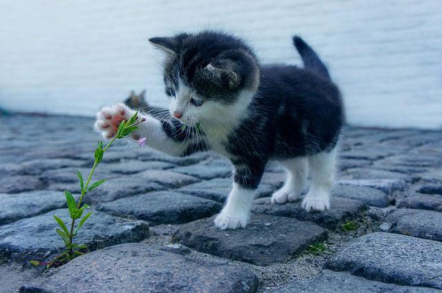 חיסונים לחתולים: מה שחשוב לדעת
