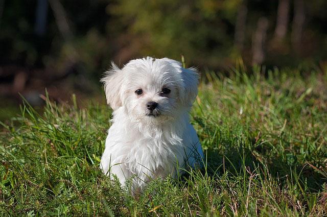 חיסונים לכלבים: אילו חיסונים חשוב להכיר