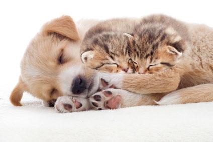 חורף חם – כיצד לטפל בבעל החיים בעונה הקרה? | מרפאה וטרינרית אנימל סנטר