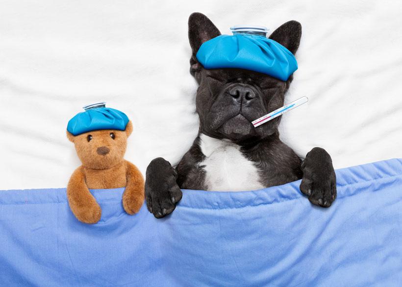 וטרינר 24 שעות: מטפלים בבעל החיים שלכם כ-24 שעות ביממה!