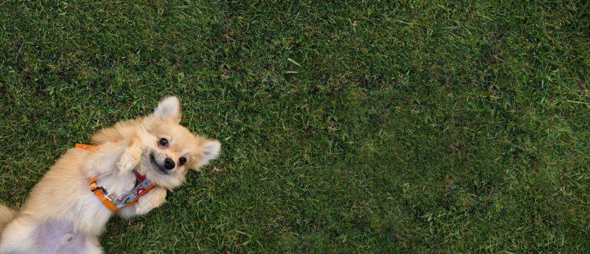 גם כלבים סובלים מאלרגיות