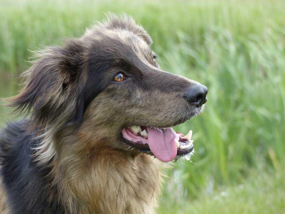 טיפולי שיניים לבעלי חיים