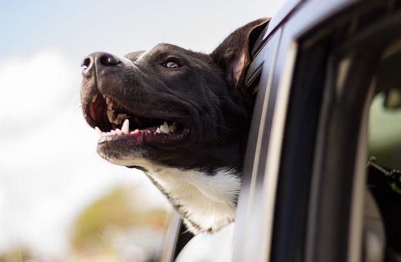 איך מגדלים כלב מאושר ובריא?
