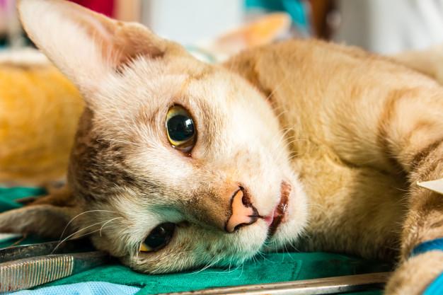 החשיבות של עיקור וסירוס בעלי חיים