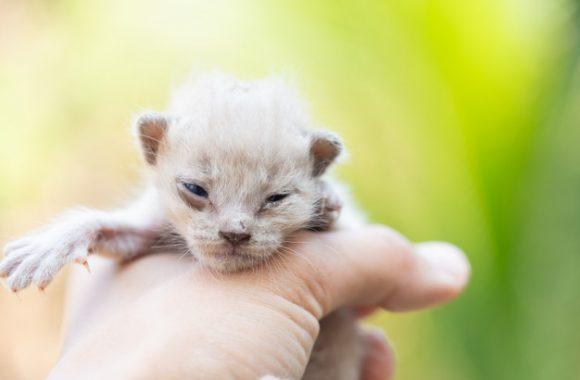 טיפול בגורי חתולים יונקים – מה חשוב לדעת?
