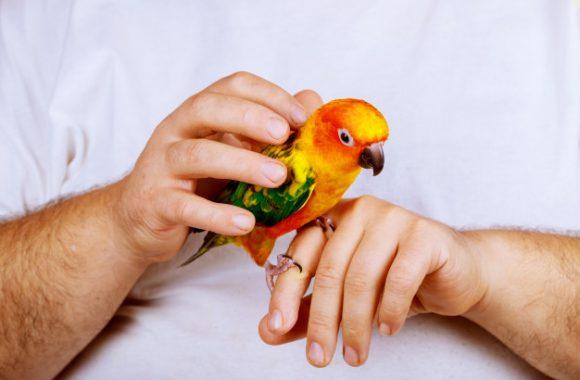 מה מייחד טיפול בחיות אקזוטיות?