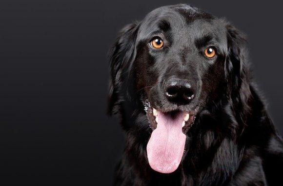 עיקור כלבה החלמה – למה לצפות ביום שאחרי?