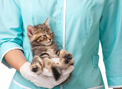 טפילי מעיים בכלבים וחתולים