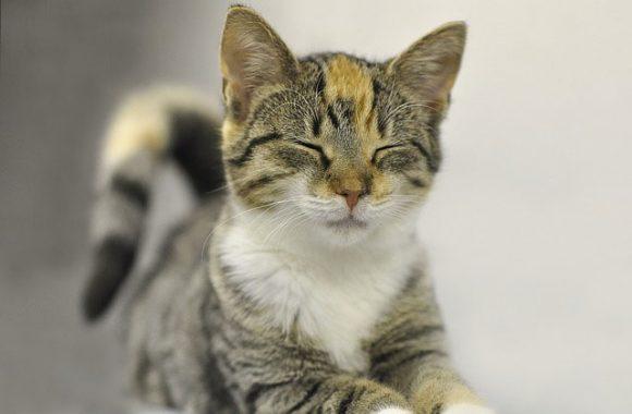 התנהגויות מוזרות של חתולים המעידות על בעיה
