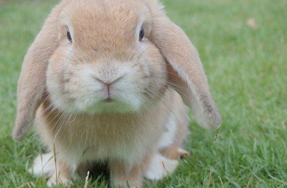 וטרינר לארנבים בדרום