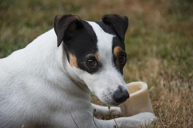 האם כדאי לפנק את הכלב עם עצם