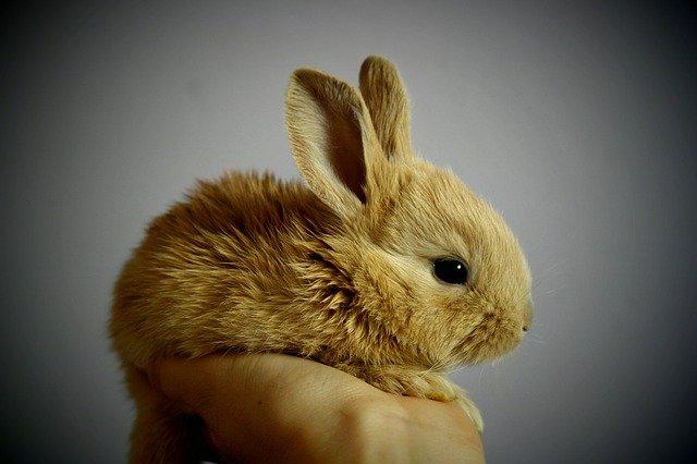 שאלות נפוצות על ארנבים