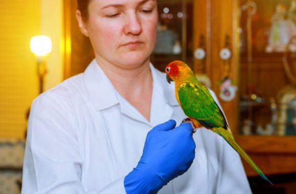 רק ציוצי ציפורים? על מחלות תוכים וציפורים המדבקות לבני אדם