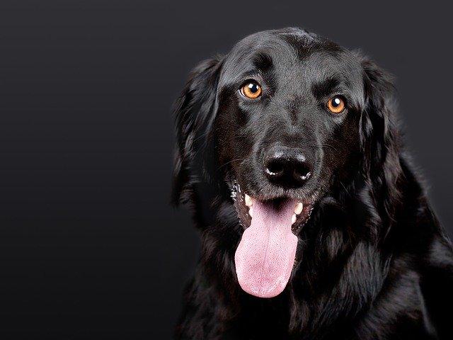 צבע אדום: איך להתנהל נכון עם בעלי החיים בזמן אזעקות?