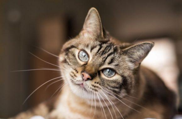 איך לגדל חתול מאושר בבית?