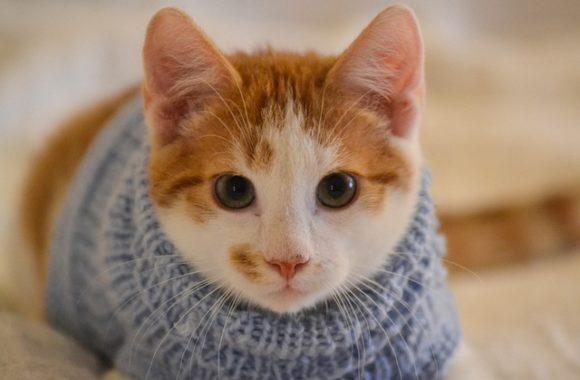 כך תדעו אם אתם מגדלים חתולים אלרגיים